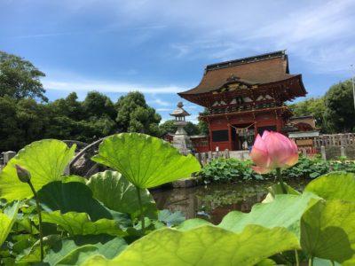 蓮の花を観に、岡崎市の伊賀八幡宮へ