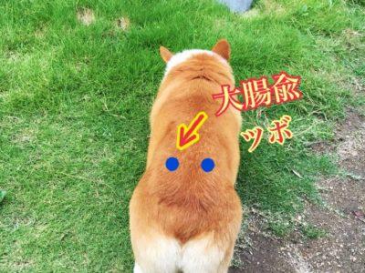 愛犬も西洋医学から東洋医学治療へ